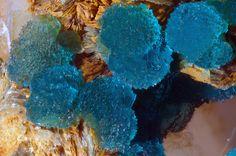 Turquoise - Pagani quarry, Ottré, Vielsalm, Stavelot Massif, Luxembourg Province, Belgium Size: 7 x 7 mm