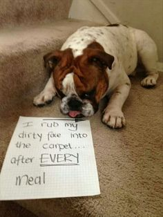 :) I'd like to find a bully who doesn't!! #bulldogproblems