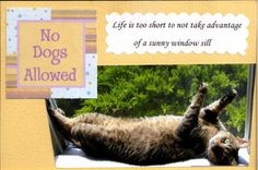 The Pet Postcard Project helps feed homeless dogs and cats, one postcard at a time! Run by Nikki Moustaki, dog trainer, author, and pet expert. Homeless Dogs, Pinterest Board, Project Life, Life Is Good, Dog Cat, Scrapbooking, Author, Kitty, Pets