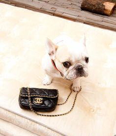 Hmm, and where did you get that Chanel bag?