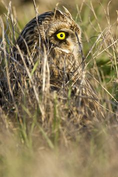 Yellow eye ! by Alain Balthazard on 500px
