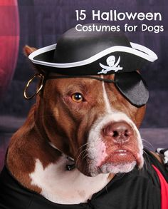 15 awesome Halloween costumes for dogs (LOL) Jasper is gonna be soo mad next year!! Hahaha