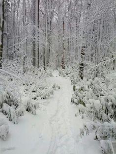 Blackwater Falls West Virginia hiking trail