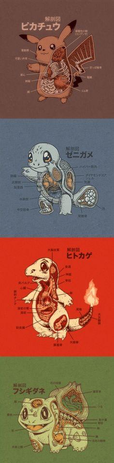 Anatomy of Pokémon