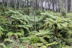 New Zealand Tip: Coromandel Peninsula · Happy Interior Blog New Zealand, Holiday Ideas, Interior, Happy, Tips, Plants, Blog, Indoor, Ser Feliz