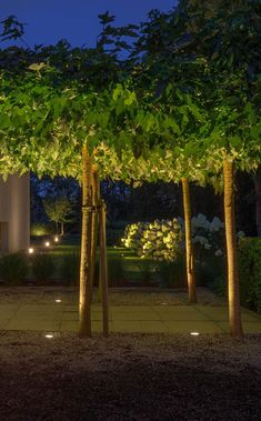 Outside Living, Tree Lighting, Arch, Outdoor Structures, Plants, Projects, Life, Living Room, Landscaping