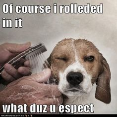 """This is cute....not so cute when my 100 pound thick coated mutt rolls in """"it"""""""