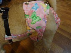 D C E C C C F Ed Bc B on Stay On Dog Diaper Pattern