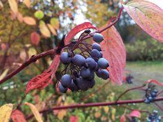 Finland, Autumn, Fall Season, Fall