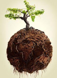 El planeta tierra da vida a un árbol