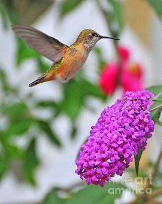 Suspended In Time Greeting Card for Sale by Angela Maher Hummingbird Garden, Hummingbird Tattoo, Beautiful Birds, Beautiful World, N Animals, Kirara, All Gods Creatures, Bird Feathers, Beautiful Creatures
