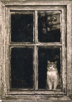 Cat in the window - Animals Pictures Crazy Cat Lady, Crazy Cats, I Love Cats, Cool Cats, Animals And Pets, Cute Animals, Cat Window, Window View, Window Art