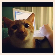 Frank wonders why the laptop has no mouse.