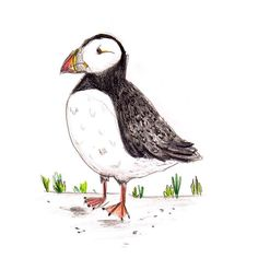 I've got a thing for puffins 💕🐧(I know this is a penguin, but it's close enough) #klassethomas