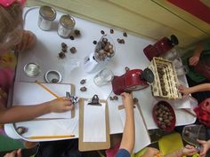 Counting and measuring acorns