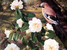 An Artists Garden : Botanical Garden Painting by Raymond Booth Desktop Wallpaper Mosaic Flowers, Garden Painting, Animation, Western Art, Bird Art, Natural History, Beautiful Birds, Botanical Gardens, Flower Art
