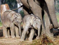 Google Image Result for http://www.magazine13.com/img/nature/cute-baby-animals/cute-baby-animals02.jpg