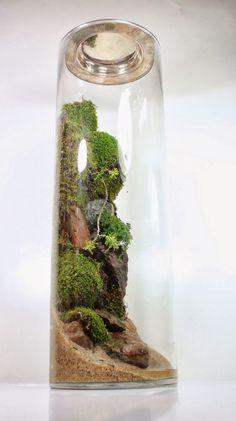 Bonsai Terrarium For Landscaping Miniature Inside The Jars 57 - DecOMG Terrarium Scene, Terrarium Plants, Glass Terrarium, Succulent Terrarium, Succulents Garden, Bottle Garden, Glass Garden, Miniature Terrarium, Miniature Gardens