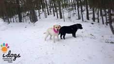 Disfrutando de la #nieve #perrosfelices #happydogs #snow #perrosdeterapia #perros #Naroa #Eli