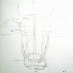 Cow head sketch