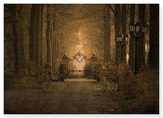 Forest Gate, Poland