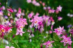 15 Beautiful Perennials That Grow In The Shade Part Shade Perennials, Flowers Perennials, Shade Shrubs, Florida Native Plants, Planting Sunflowers, Shade Garden Plants, Shade Tolerant Plants, Pool Plants, Summer Plants