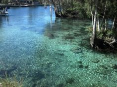 See 122 photos from 667 visitors about manatees, kayaks, and snorkeling. Not crowded and all three of the springs were easily. Crystal River Florida, Manatees, Three Sisters, Snorkeling, Kayaking, The Outsiders, Explore, Places, Water