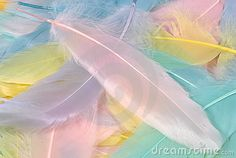 Pastel Feathers by Dana Rothstein, via Dreamstime