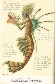 oh darling my darling - - oh darling my darling Illustration Caribbean Mermaid by Tony DiTerlizzi (from Spiderwick's Field Guide to the Fantastical World) Art And Illustration, Mermaid Illustration, Spiderwick, Fantasy Kunst, Mermaids And Mermen, Merfolk, Mythological Creatures, Mermaid Art, Scary Mermaid