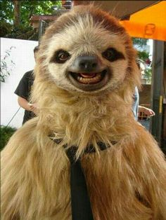 Sloth grins....cute but kind of creepy at the same time lol