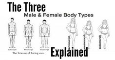 "There are three general categories of Male & Female body types: Ectomorph, Mesomorph, and Endomorph. Many people think that ""body type"" just describes the way a person looks, but your body type can also provide information about how you respond to food intake and your hormonal and sympathetic nervous system (SNS) characteristics. These factors can be linked to metabolic [...]"