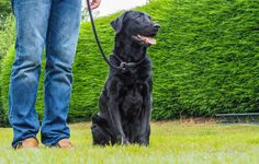 Classic Black Labrador Dog with his owner at the Andy Biggar Photography Training Day .. photo by Louise Kathryn