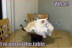 #what #not #on #table #cat #funny #lol