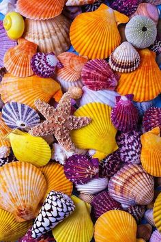 Colors Of The Sea!