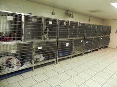 . Cat Kennel, Dog Kennels, Big Bird Cage, Dog Kennel Designs, Pet Clinic, Veterinary Medicine, Parlour, Locker Storage, Design Ideas