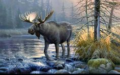 Great pic of a moose ....