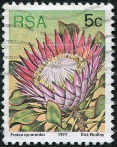South Africa Circa 1977 Stamp Printed Stock Photo (Edit Now) 166920977 Protea Art, Protea Flower, Flower Stamp, Flower Art, South Afrika, King Protea, African Flowers, Stamp Printing, Vintage Stamps