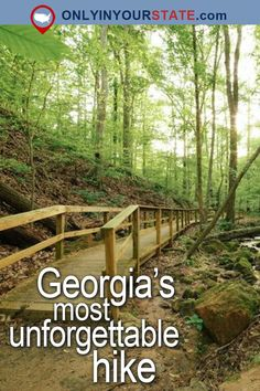 Travel | Georgia | Attractions | USA | East Coast | Outdoor | Adventure | Easy Hikes | Trails | Hiking | Nature | Beautiful Places | Natural Wonders | Hidden Gems | Scenic Hikes | Cascade Springs | Nature Preserve | State Parks | Atlanta | Forest | Things To Do | Day Trips | Places To Visit | Bucket List | Waterfalls | Unforgettable Hike | Georgia Trails
