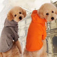 Newest Quality&Classical Plain Dog Hoodies with Kangroo Pocket Solid Dog Sweatshirt Cotton Dog solid Hoodies Coat dog clothes