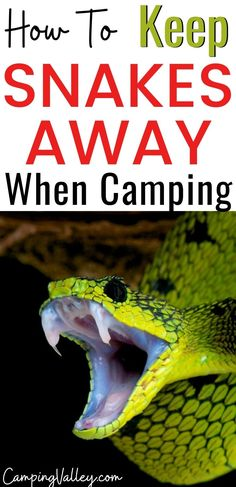 You aren't a fan of snakes but you love to camp in the wild? You can enjoy in nature nevertheless that snakes can be near. Follow my camping tips that will help you to repel snakes away from your tent. #repelsnakes #campinganimals #wildanimas #reptiles #campinginnature #wildcamping #snakerepellent