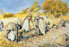 Carl Larsson - Potato Harvest