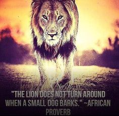If you want to be a lion you must train with lions popular dont be distracted by barking dogs when there is a lion within you fandeluxe Choice Image