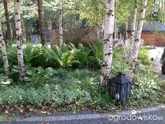 Roztoczańskie klimaty - strona 7 - Forum ogrodnicze - Ogrodowisko