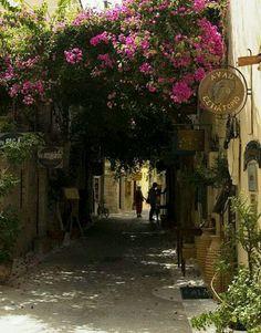 All these bougainvilleas...Heraklio, Crete