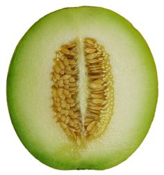http://upload.wikimedia.org/wikipedia/commons/c/c3/Cantaloupe_Melon_cross_section.png