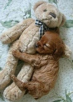 I can't NOT pin this / Dogs ♥ on imgfave Cute Baby Animals, Animals And Pets, Funny Animals, Cute Puppies, Cute Dogs, Dogs And Puppies, Doggies, Baby Dogs, Dog Rules