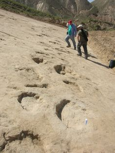 Evidence that dinosaurs existed. Early Cretaceous sauropod tracks at the Liujiaxia Dinosaur National Geopark study site Dinosaur Tracks, Dinosaur Bones, Dinosaur Fossils, Earth Science, Science Nature, Study Site, Aliens, Fossil Hunting, Archaeological Discoveries