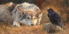 Both wolves and ravens have the ability to form social attachments and they seem to have evolved over many years to form these attachments with each other, to both species' benefit.