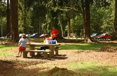 New Forest: Blackwater Car Park and Arboretum.  This is the best place to experience the majestic Douglas firs and redwoods of the Rhinefield Ornamental Drive. Click on the links to find out about the waymarked trails from this car park.