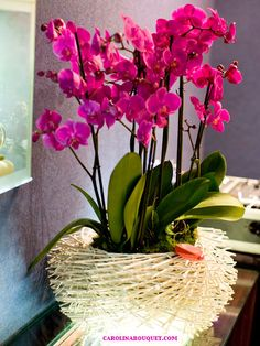 How To Keep Orchids Alive And Looking Gorgeous Home Flowers, All Flowers, Dried Flowers, Beautiful Flowers, Orchid Centerpieces, Orchid Arrangements, Orchids Garden, Orchid Plants, Orchid Leaves